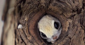 squirrel-hiding-in-a-tree-big
